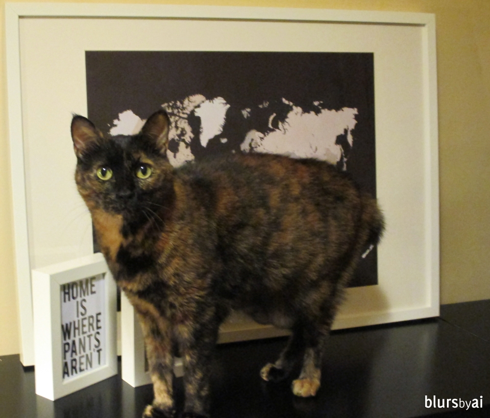 World map print and cat