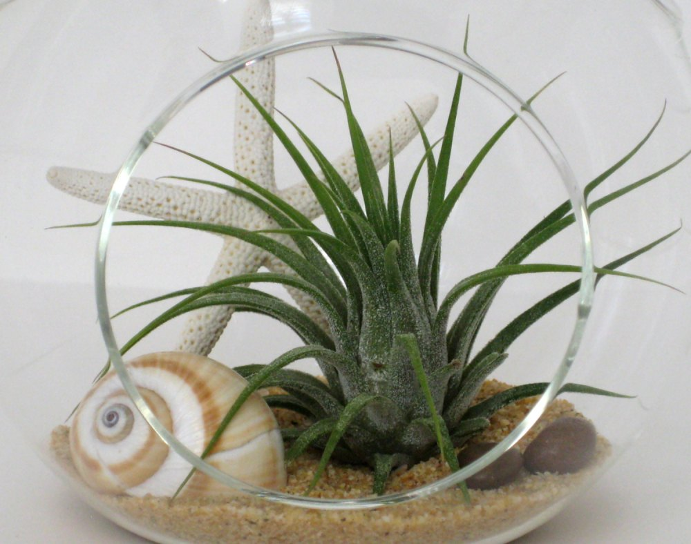 Glass terrarium for air plants