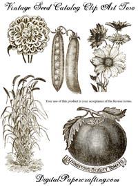 Vintage-Seeds_ClipArt_DigitalPapercrafts