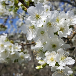 spring in spain 10
