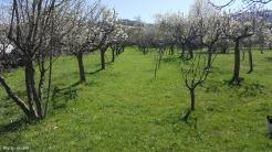 spring in spain 11