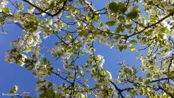 spring in spain 13