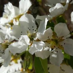 spring in spain 14