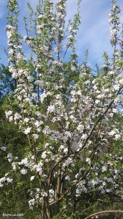spring in spain 15