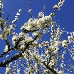 spring in spain 2