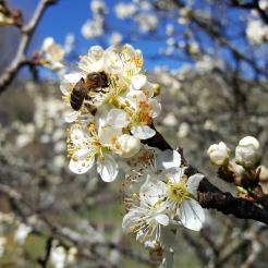 spring in spain 3
