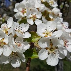 spring in spain 6