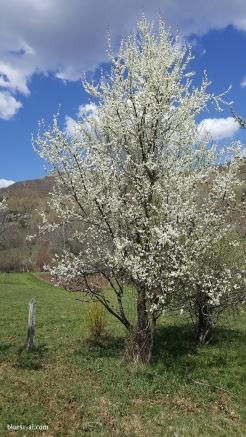 spring in spain 7