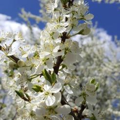 spring in spain 8