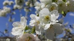 spring in spain 9
